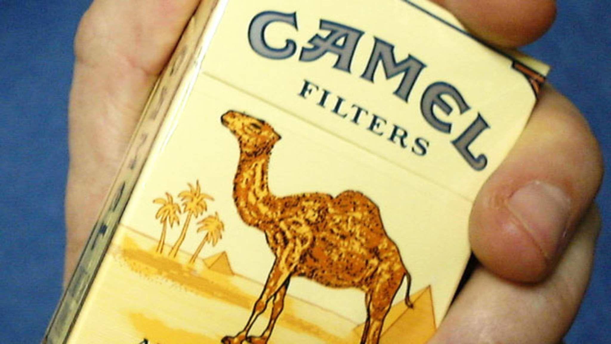 Camel Smoking
