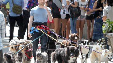 Daniel Radcliffe With Dog