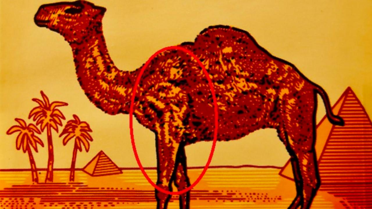 Camel Subliminal Header 1280x720
